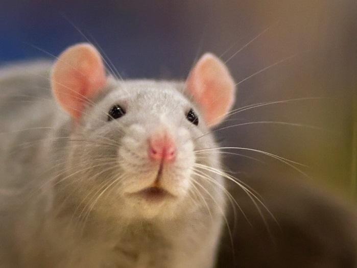Vídeo com rato passeando no engradado de coca-cola alerta para os riscos de não lavar a latinha antes de beber