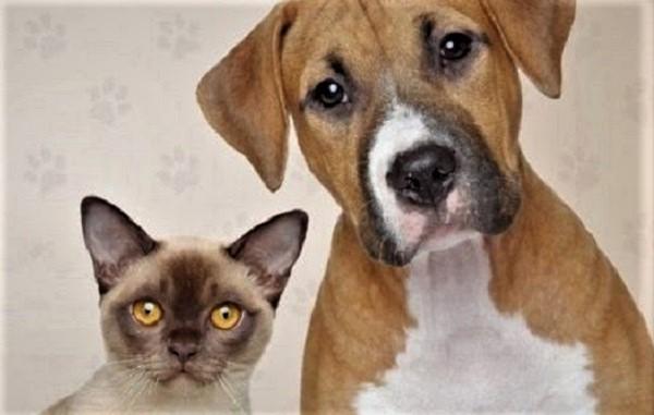Vacinação de Cães e Gatos em Queimados, no sábado, com Cãominhada contra maus-tratos e abandono de animais