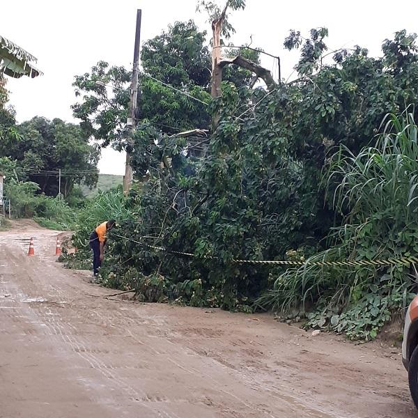 Árvore que caiu sobre a fiação elétrica no Pau da Forca já foi removida