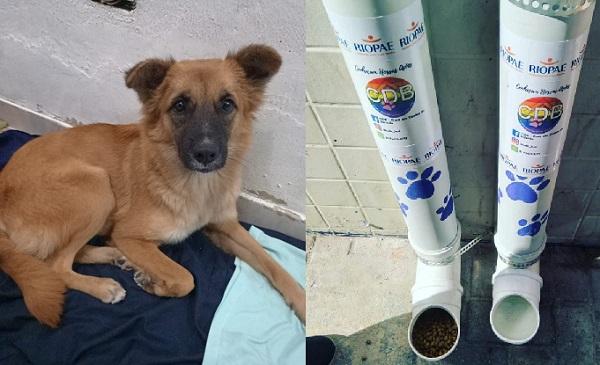 Ong instala comedouros e bebedouros para animais de rua em São João de Meriti