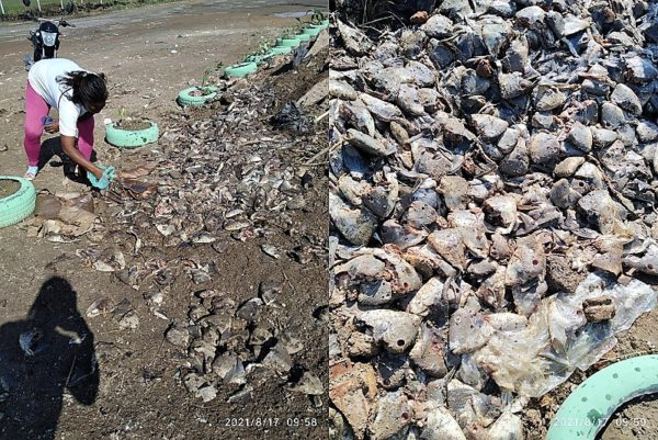 Moradores  do Parque Olimpo querem punição para Frigorífico que despejou milhares de cabeças de peixe na entrada do bairro