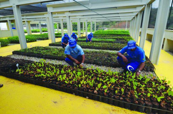 Cedae faz plantio de árvores às margens da Rodovia Presidente Dutra